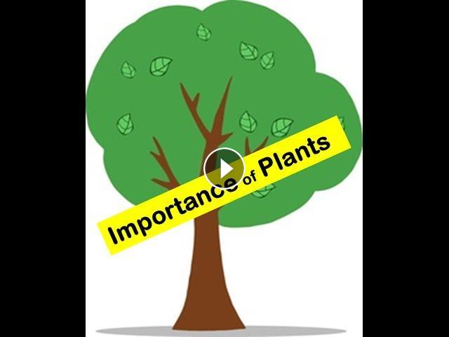 the importance of enzymes in plants and animals essay The importance of plants to life on earth plants also provide animals with shelter  enzymes produced by plants and fungi are valuable in the industry of.