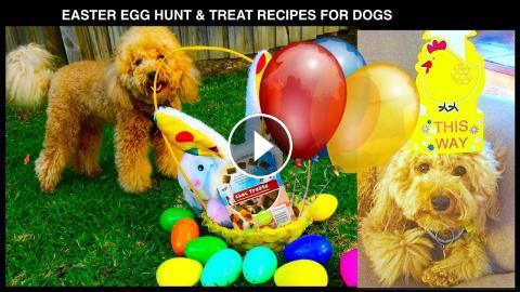 Easter egg hunt dog party recipe treats compilation diy dog food easter egg hunt dog party recipe treats compilation diy dog food by cooking for dogs forumfinder Images