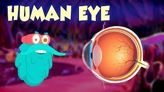 Human Eye - The Dr. Binocs Show | Best Learning Videos For Kids | Peekaboo Kidz